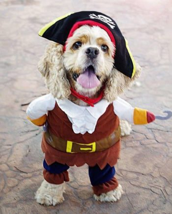 Blackbeard Pet Costume