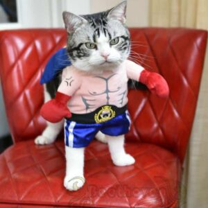 Rocky Costume for Cats