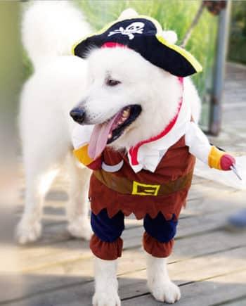 Blackbeard Pet Costume