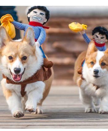 Pet Rider Costume